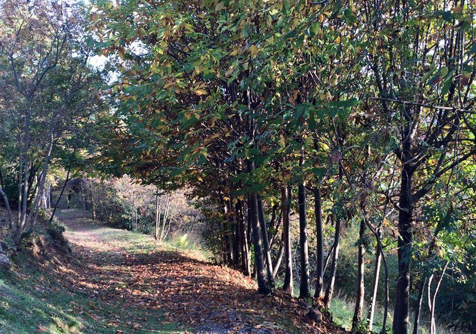 e un dì nascon le foglie … che poi cadono al suolo